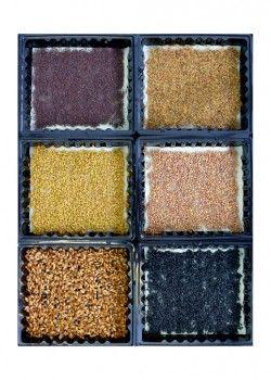 """Stap 3 - Plaats maximaal 12 kweekbakjes in de """"grow trays"""" (op de foto wordt gebruik gemaakt van 6 grotere kweekbakjes)."""
