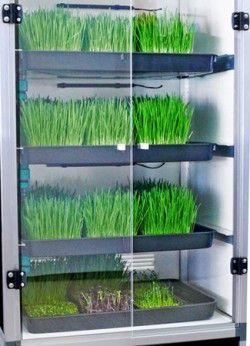 Stap 4 - Plaats de vier grow trays in de Sprouter kweekkast.
